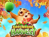 Groundhog Harvest